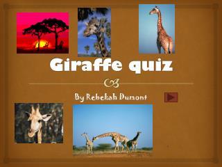 Giraffe quiz