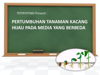 PERTUMBUHAN TANAMAN KACANG HIJAU PADA MEDIA YANG BERBEDA