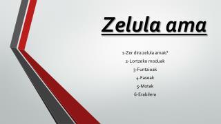 Zelula  ama