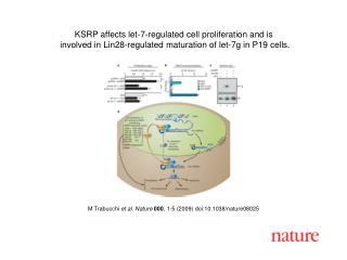 M Trabucchi  et al.  Nature 000 , 1- 5  (2009) doi:10.1038/nature080 25