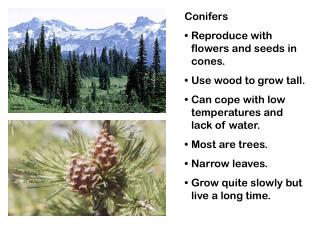 Conifers Reproduce with flowers and seeds in cones. Use wood to grow tall.