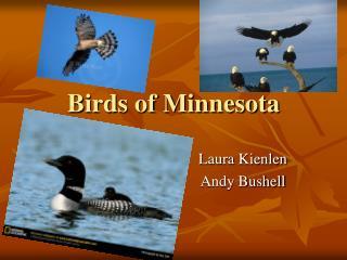 Birds of Minnesota