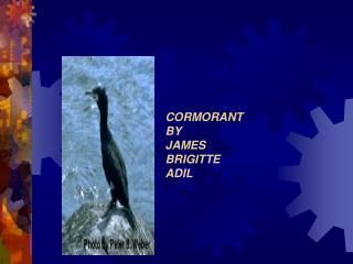 CORMORANT BY  JAMES BRIGITTE ADIL