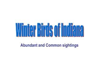 Abundant and Common sightings