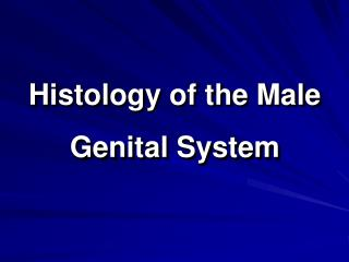 Histology of the Male Genital System