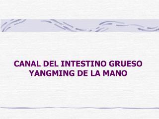 CANAL DEL INTESTINO GRUESO YANGMING DE LA MANO