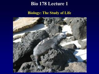 Bio 178 Lecture 1