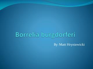 Borrelia burgdorferi