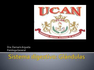 Sistema digestivo: Glándulas
