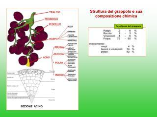 Struttura del grappolo e sua composizione chimica