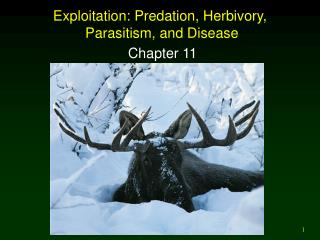 Exploitation: Predation, Herbivory,  Parasitism, and Disease