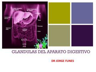 GLANDULAS DEL APARATO DIGESTIVO