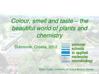 Colour, smell and taste – the beautiful world of plants and chemistry
