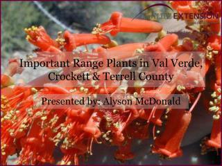 Important Range Plants in Val Verde, Crockett & Terrell County