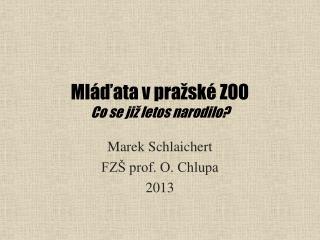Mláďata v pražské ZOO Co se již letos narodilo?