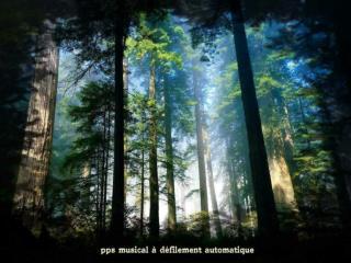 les arbres pouvaient parler