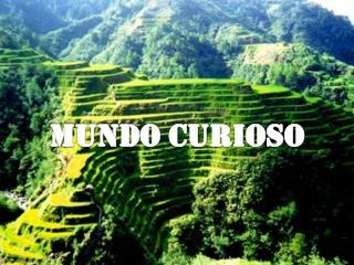 MUNDO CURIOSO