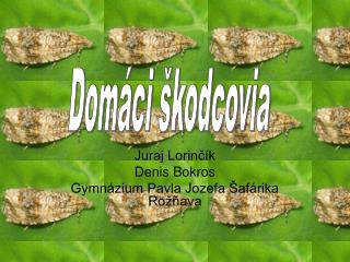 Juraj Lorinčík Denis Bokros Gymnázium Pavla Jozefa Šafárika Rožňava