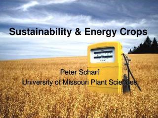 Sustainability & Energy Crops