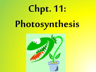 Chpt . 11: Photosynthesis