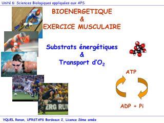 BIOENERGETIQUE & EXERCICE MUSCULAIRE