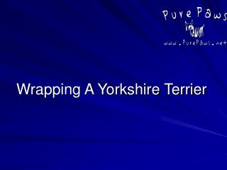 Wrapping A Yorkshire Terrier