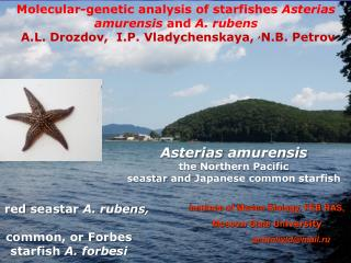 Molecular-genetic analysis of starfishes  Asterias amurensis  and  A.  r ubens