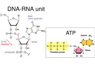 DNA-RNA unit