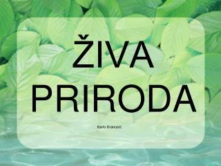 IVA PRIRODA