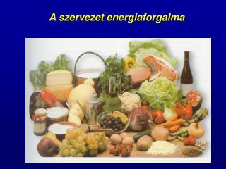 A szervezet energiaforgalma