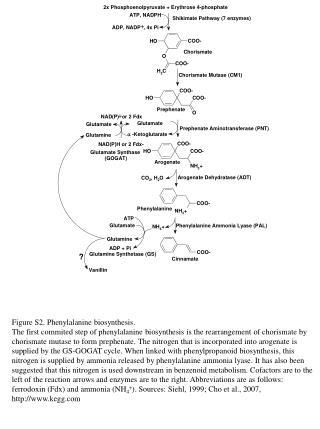 Figure S2. Phenylalanine biosynthesis.
