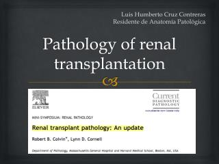 Pathology  of renal  transplantation