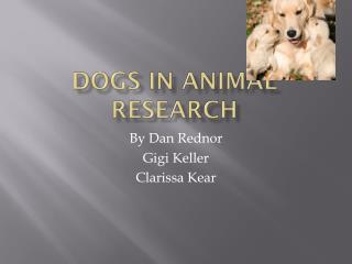 Dogs in Animal Research