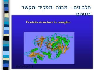חלבונים – מבנה ותפקיד והקשר ביניהם