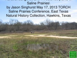 Why are Arkansas, Louisiana, and Texas scientists interested in saline prairies?