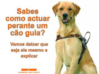 Sabes  como  actuar perante um cão guia ?