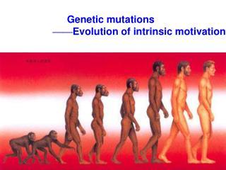 Genetic mutations  —— Evolution of intrinsic motivation