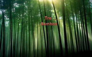 Tre …     Bamboo