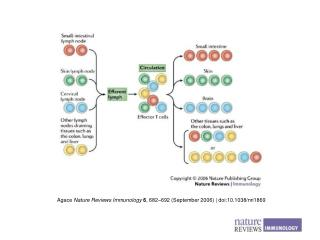 Agace  Nature Reviews Immunology 6 , 682 – 692 (September 2006) | doi:10.1038/nri1869
