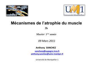 Mécanismes de l'atrophie du muscle 2h