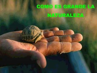 COMO ES GRANDE LA NATURALEZA