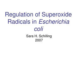 Regulation of Superoxide Radicals in  Escherichia coli