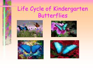 Life Cycle of Kindergarten Butterflies