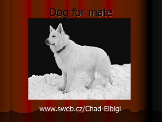 Dog for mate