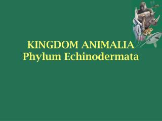KINGDOM ANIMALIA Phylum Echinodermata