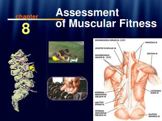 Assessment  of Muscular Fitness