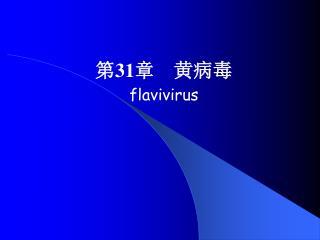 第 31 章    黄病毒 flavivirus