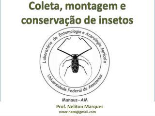 Prof. Neliton Marques nmerinato@gmail
