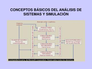 CONCEPTOS B SICOS DEL AN LISIS DE SISTEMAS Y SIMULACI N