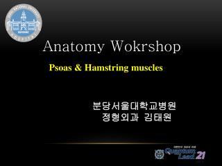 Anatomy  Wokrshop